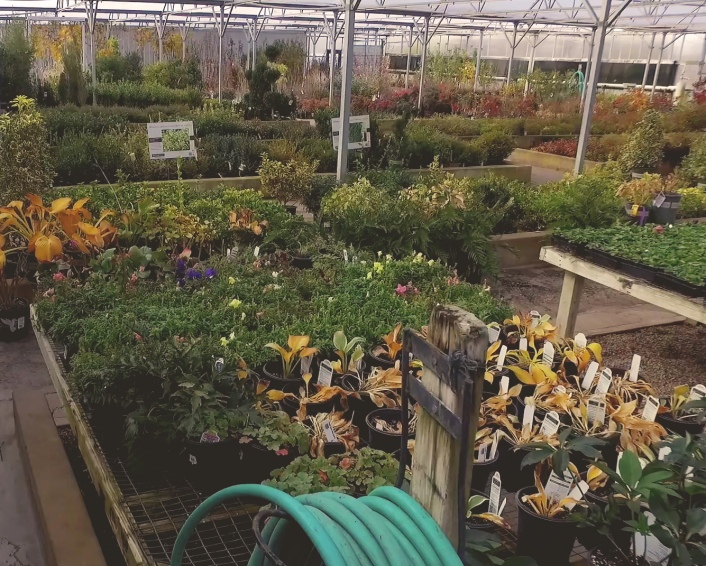 precure nursery garden center greenhouse
